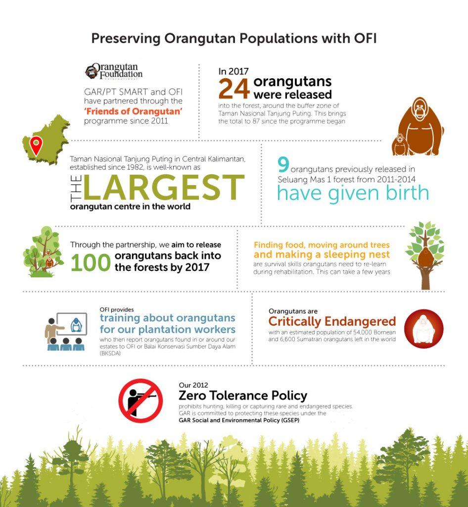 Orangutan-Infographic-ENG