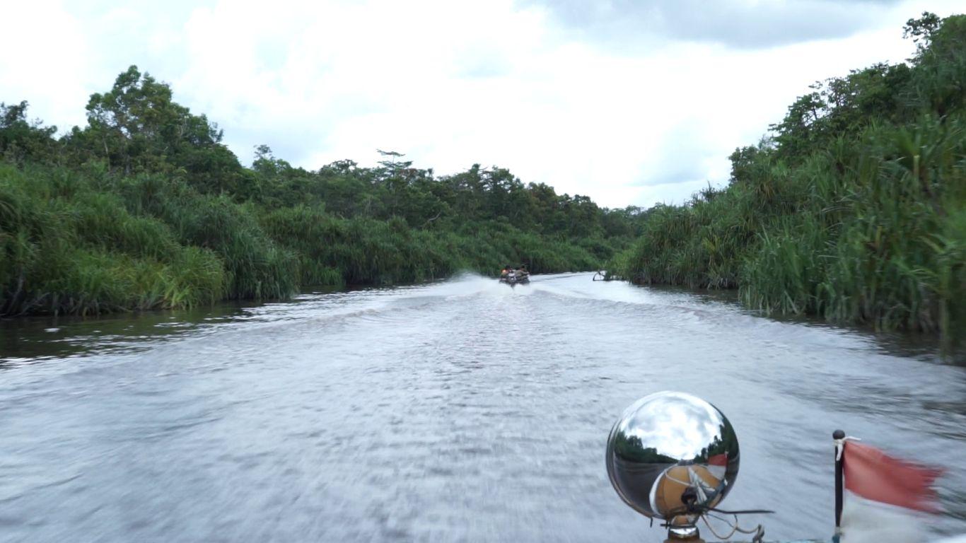 Speedboat menyusuri taman nasional beriklim tropis yang dikenal sebagai area konservasi orangutan