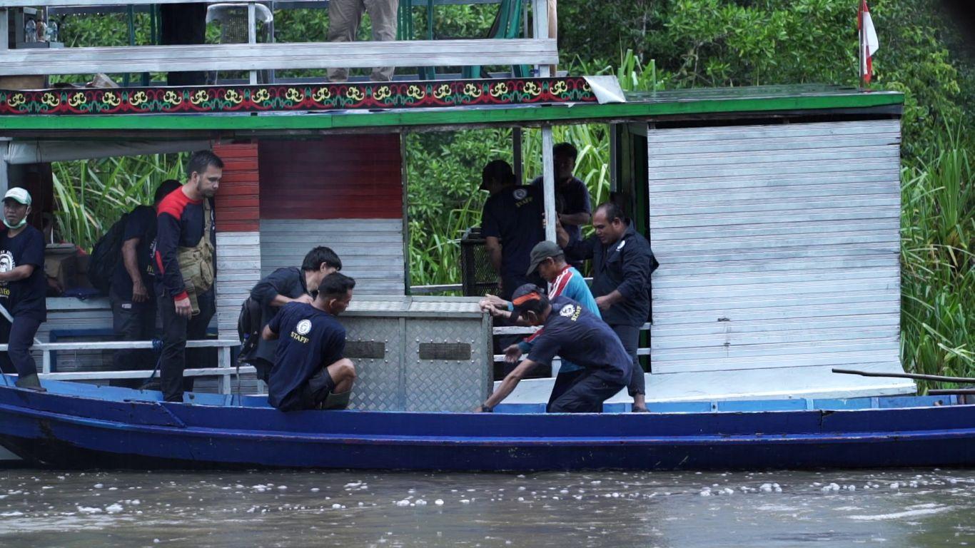 Petugas Orangutan Foundation International memindahkan peti berisi orangutan ke kapal kecil